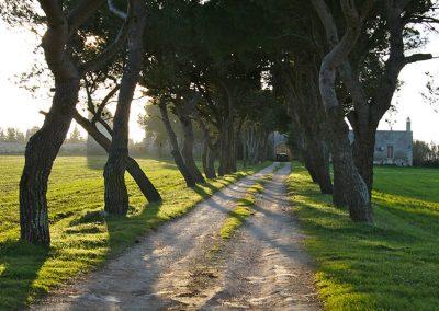 La via di Casole